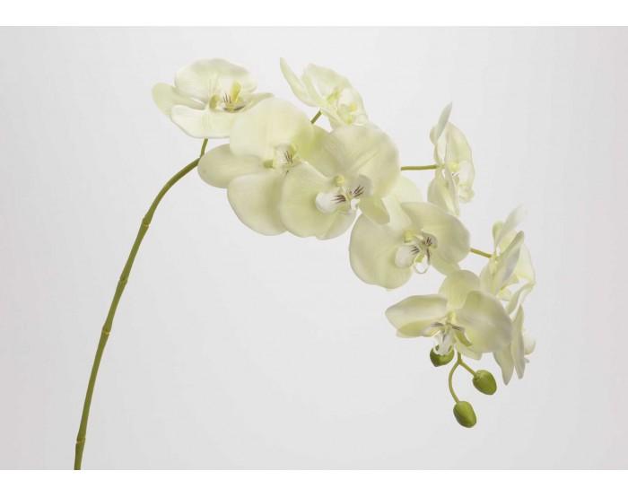 Orchidée Vert clair