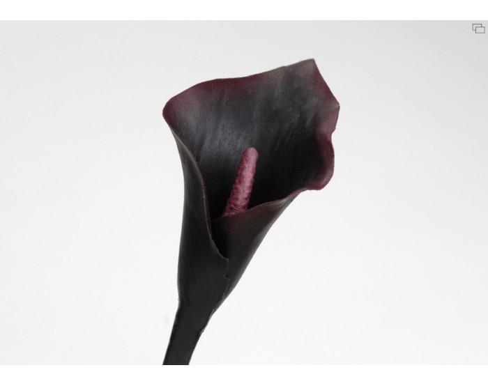 arum violet